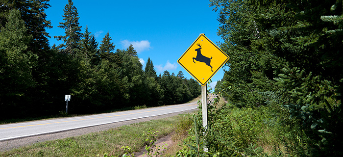 Country road with a deer crossing sign